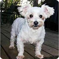 Adopt A Pet :: Lexie - Mooy, AL