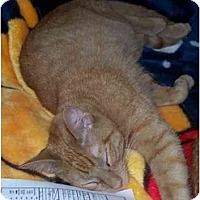 Adopt A Pet :: Spanky - Davis, CA