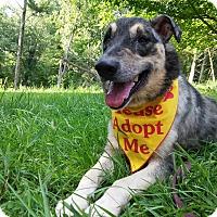 Adopt A Pet :: Lucky - Louisville, KY