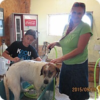 Adopt A Pet :: Page - Walthill, NE