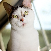 Adopt A Pet :: Frosty - Martinsville, IN