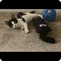 Adopt A Pet :: Daphnee - Hampton, VA