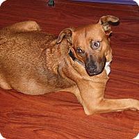 Adopt A Pet :: Arizona - mooresville, IN