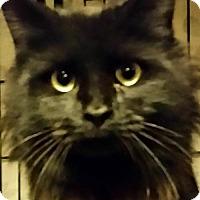 Adopt A Pet :: Merlot - Buford, GA