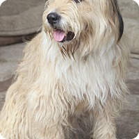 Adopt A Pet :: Morgan - Woonsocket, RI