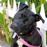 Adopt A Pet :: Lotus - Los Angeles, CA