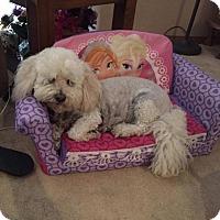 Adopt A Pet :: Stuckey - Aurora, CO