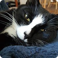 Adopt A Pet :: Matilda - Kirkland, WA