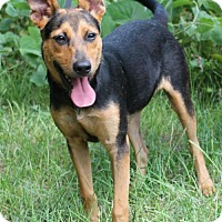 Adopt A Pet :: Chandler 24407 - Prattville, AL