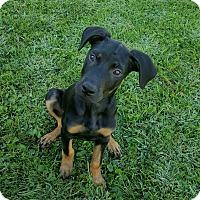 Adopt A Pet :: Rockette - New Oxford, PA