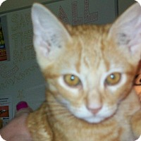 Adopt A Pet :: Nitche - Mexia, TX