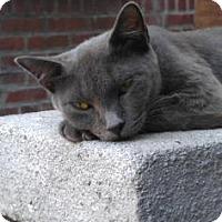 Adopt A Pet :: Allie - New York, NY
