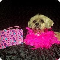 Adopt A Pet :: Sammi West - Urbana, OH