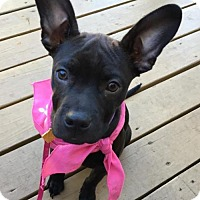 Adopt A Pet :: Zoe - Mayer, MN