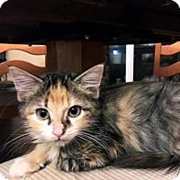 Adopt A Pet :: Unga - Austin, TX
