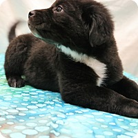 Adopt A Pet :: Mattie - Allentown, VA