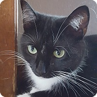 Adopt A Pet :: Orca - Franklin, IN