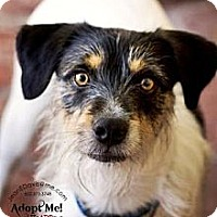 Adopt A Pet :: George - Gilbert, AZ