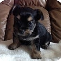 Adopt A Pet :: Jinx - Yakima, WA