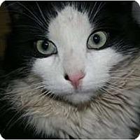 Adopt A Pet :: Oscar - Montreal, QC