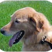 Adopt A Pet :: Dusty - Jacksonville, FL