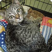 Adopt A Pet :: Prometheus - Medina, OH