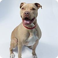 Adopt A Pet :: Keno - Santa Barbara, CA
