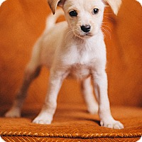 Adopt A Pet :: Lovey - Portland, OR