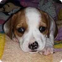 Adopt A Pet :: Summer - Marlton, NJ