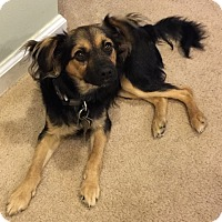 Adopt A Pet :: KEYS - Hurricane, UT