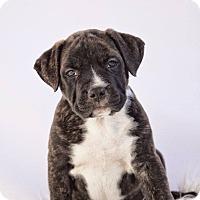 Adopt A Pet :: Maggie - West Allis, WI