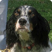 Adopt A Pet :: LUCKY - Pine Grove, PA