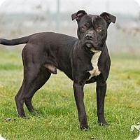 Adopt A Pet :: Burke - Salem, OR