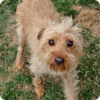 Adopt A Pet :: Shauna - Meridian, ID