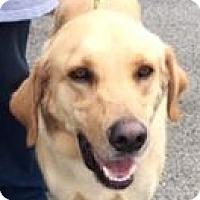 Adopt A Pet :: Morgan - Canoga Park, CA