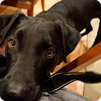 Adopt A Pet :: River - Boulder, CO