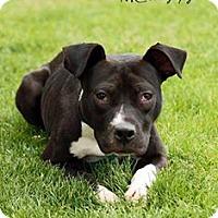 Adopt A Pet :: Wyn - Salt Lake City, UT