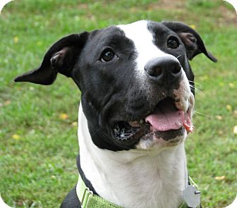 Terrier (Unknown Type, Medium) Mix Dog for adoption in New Kensington, Pennsylvania - Wanda
