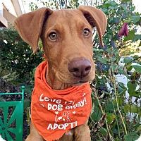 Adopt A Pet :: Zeek - Wilmington, DE