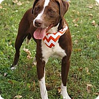 Adopt A Pet :: clyde in CT - Manchester, CT