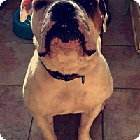 Adopt A Pet :: Gus Gus - Champaign, IL