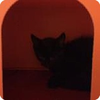 Adopt A Pet :: Hershey - Janesville, WI