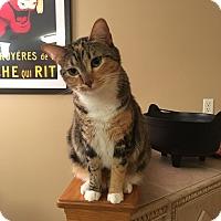 Adopt A Pet :: Mrs. Norris - Middleton, WI