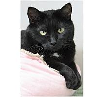 Adopt A Pet :: Mama - San Carlos, CA
