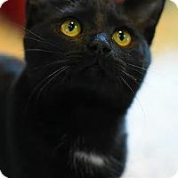 Adopt A Pet :: Tara - Aiken, SC
