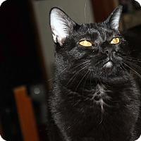 Adopt A Pet :: Clara - $25.00 - Naperville, IL