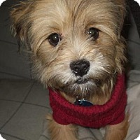 Adopt A Pet :: Twiggy is Reserved - Kirkland, QC