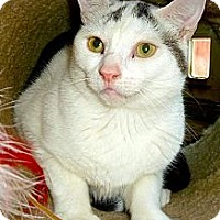 Adopt A Pet :: Carney - Carmel, NY