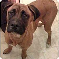 Adopt A Pet :: Cheelios - Thomasville, GA