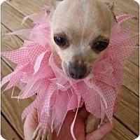 Adopt A Pet :: Angel - Mooy, AL